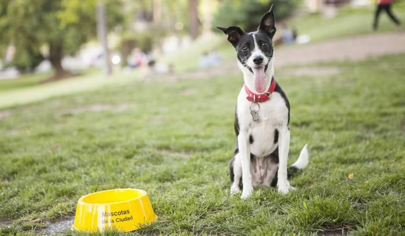 Consejos y cuidados para que tus mascotas no sufran el verano y el fin de año