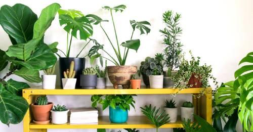 ¿Necesitas purificar la energía de ciertos espacios en tu hogar? Prueba con esta