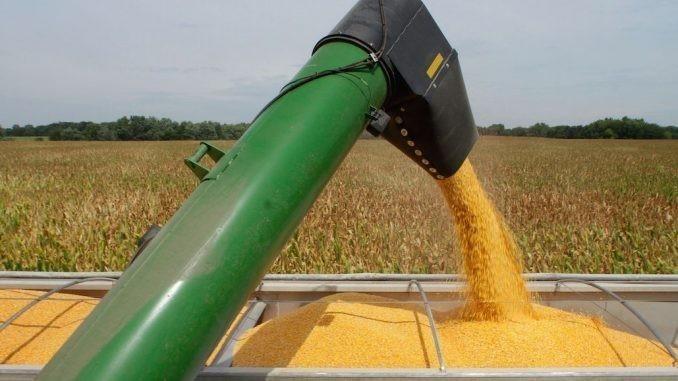 Rusia es el mayor exportador de maíz de toda la Unión Europea