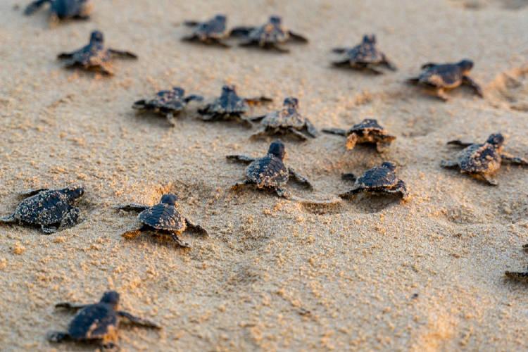 tortugas arena