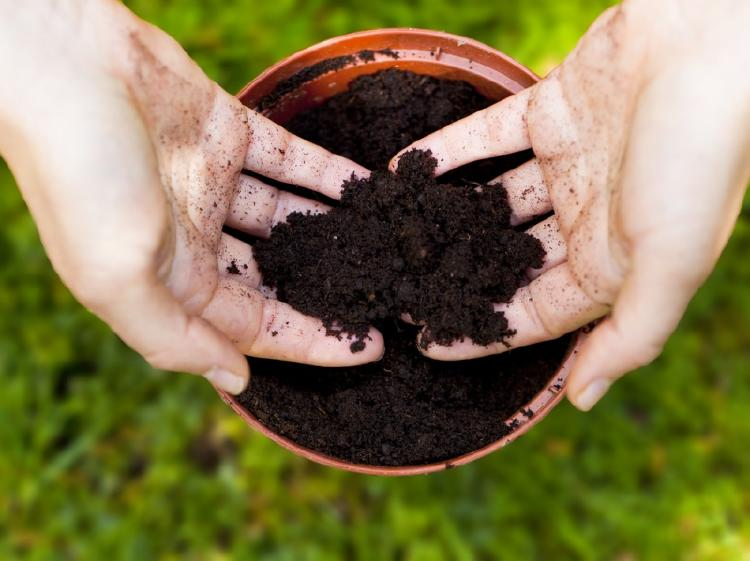 Poner tierra en una maceta con las manos