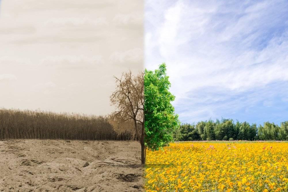 Todo sobre la salud ambiental y su importancia para el planeta