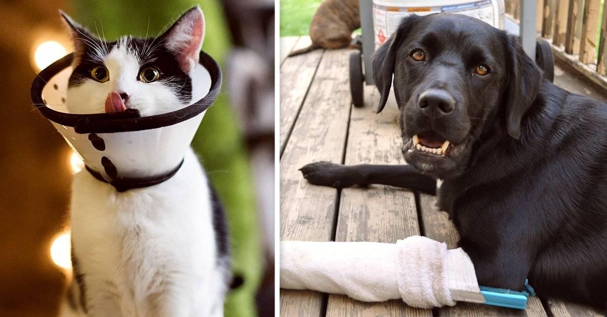Principios de primeros auxilios para mascotas que debes conocer para poder ayudarlas