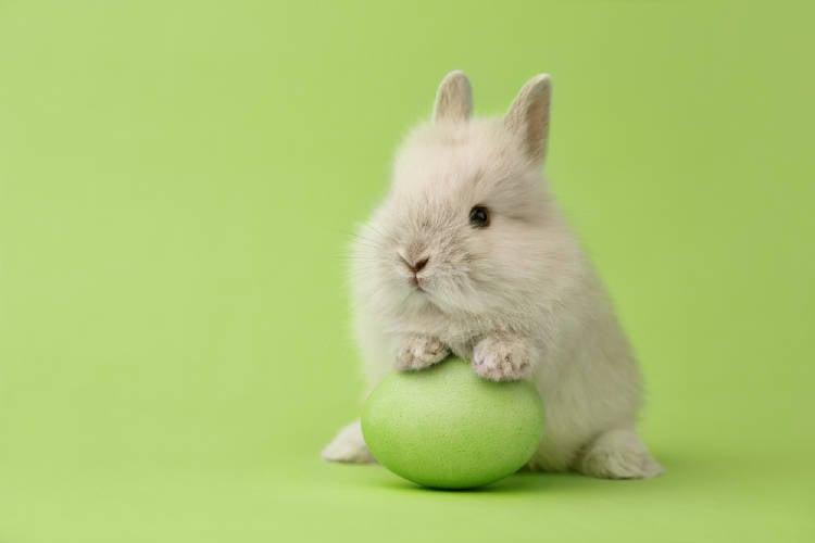 conejo fondo verde huevo
