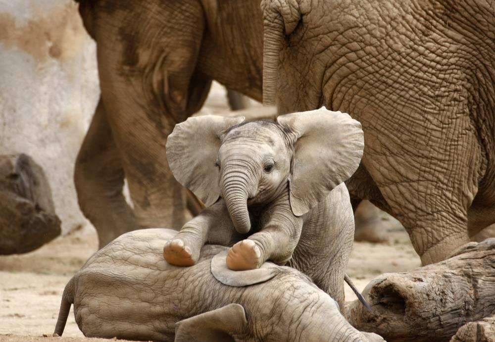El animal que veas primero te dirá cuál es tu mayor virtud