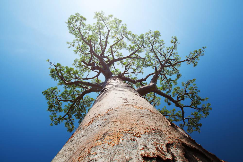 Madagascar plantará 60 millones de árboles para recuperar sus bosques