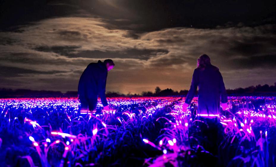 Campos de cultivo luminiscentes: una alternativa sustentable a los pesticidas