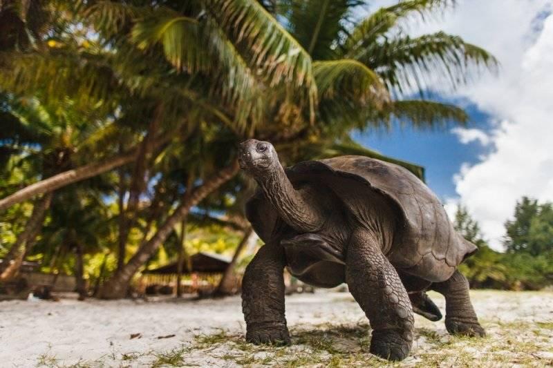 Estos animales de Sudamérica se enfrentan a la extinción por nuestra culpa