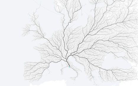La teoría constructal explica de manera simple la complejidad de las formas que surgen en la naturaleza