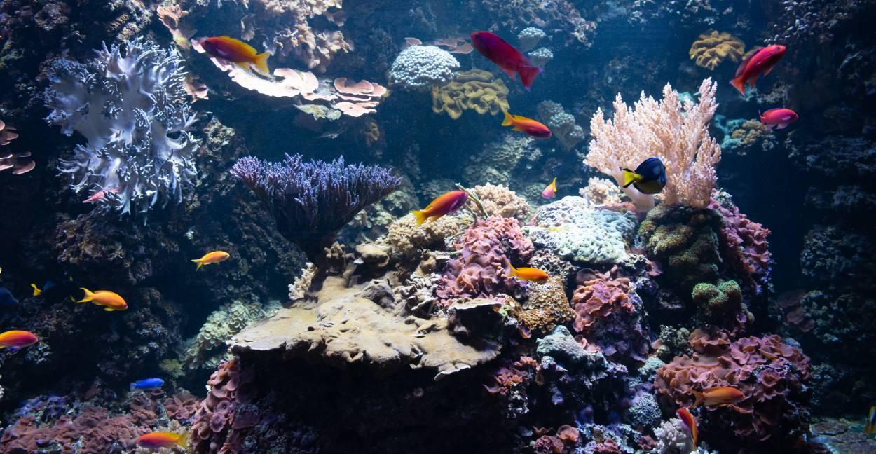 Hemos perdido la mitad de los arrecifes de coral del mundo