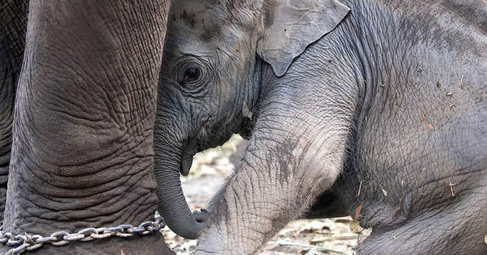 Por qué nunca deberías montar un elefante cuando viajas