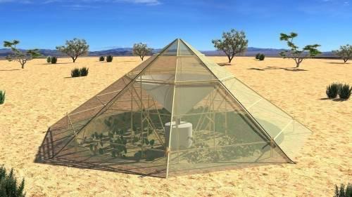 Un invernadero que permite que las plantas puedan crecer ¡en el desierto!