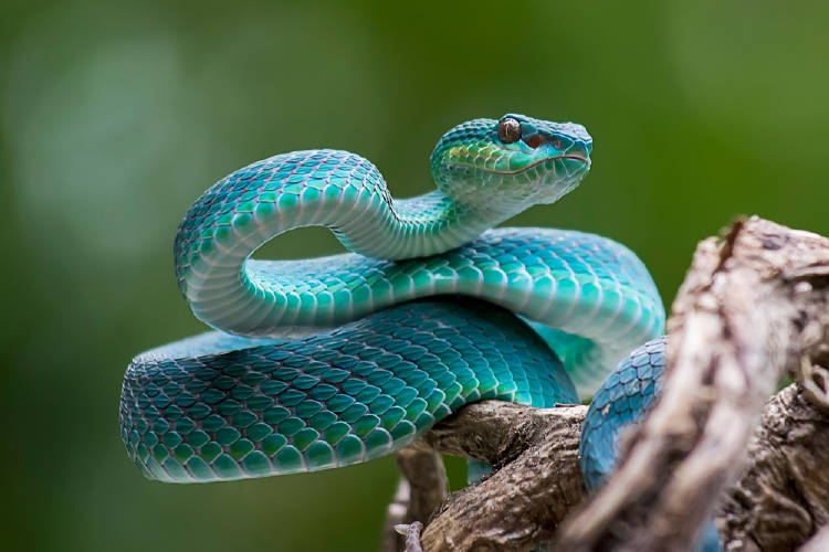 Serpiente azul