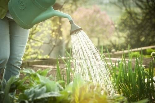 Usos del vinagre en la huerta y el jardín