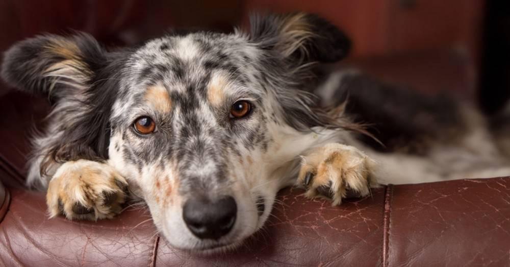 5 cosas que los perros pueden predecir mejor que cualquier experto