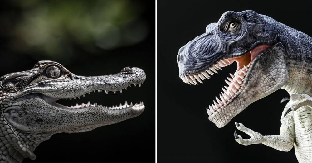 Este eslabón perdido entre el cocodrilo y el dinosaurio tiene alucinados a lo..