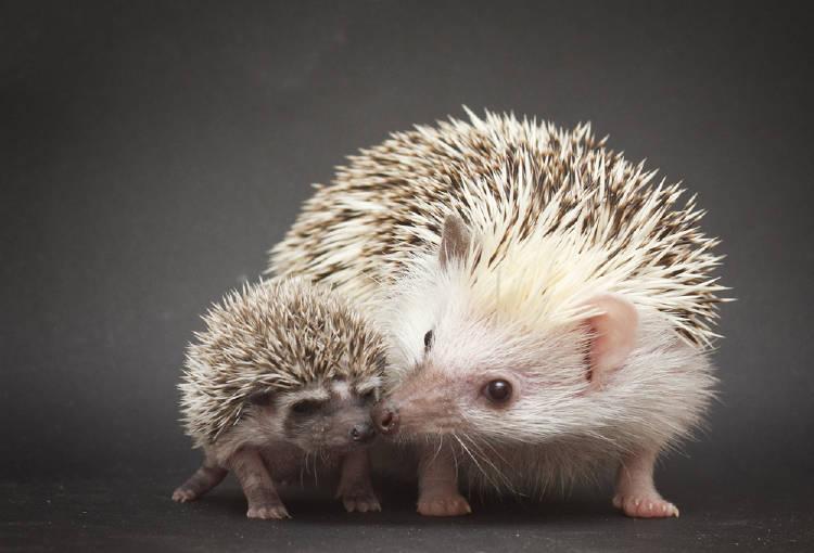 pequeños roedores