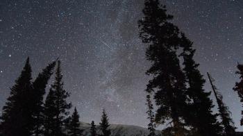 bosque de noche con cielo estrellado y estrella fugaz