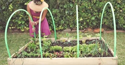 Cómo hacer un práctico invernadero con aros de hula hula