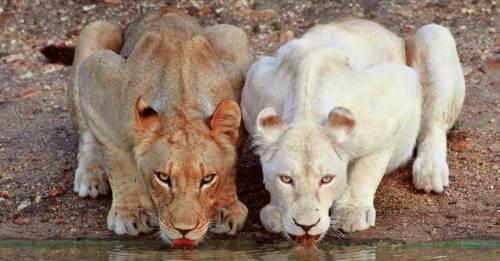 7 animales albinos que demuestran que todos son hermosos por igual