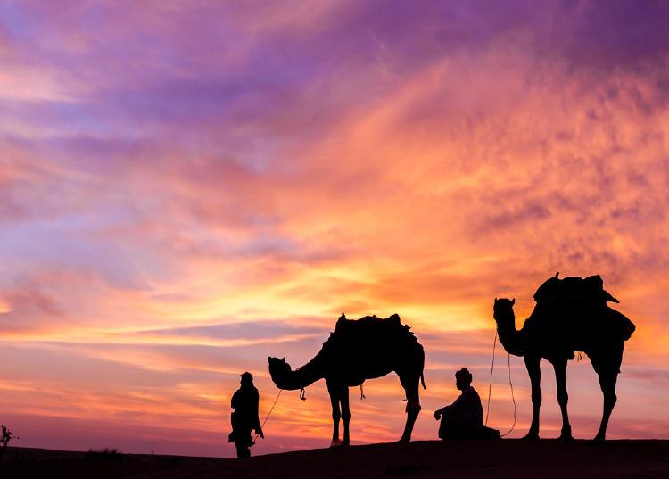 desierto somalia camellos