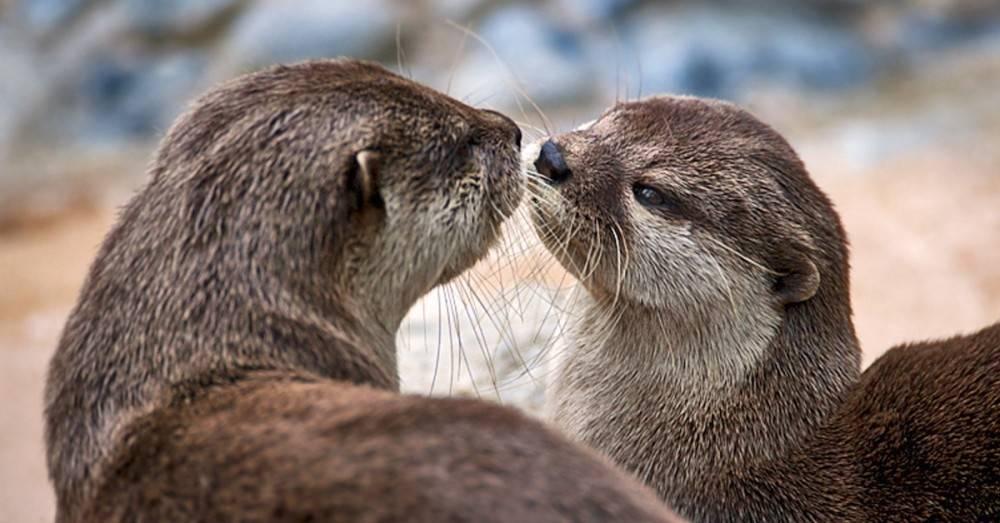 3 curiosidades sobre el sexo en el reino animal