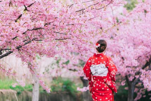 El cambio climático está haciendo que los cerezos en flor de Kioto florezcan más temprano en 1.200 años