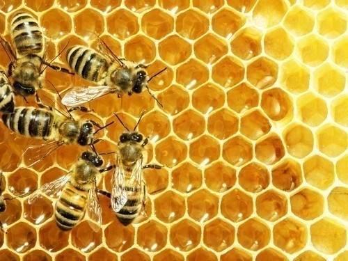 7 cosas que puedes hacer para salvar a las abejas