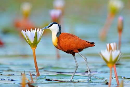 Día de la Biodiversidad: una oportunidad para ver nuestro entorno con otros ojos