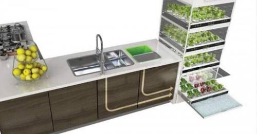 Sistema hidropónico para cultivar hortalizas todo el año sin un jardín