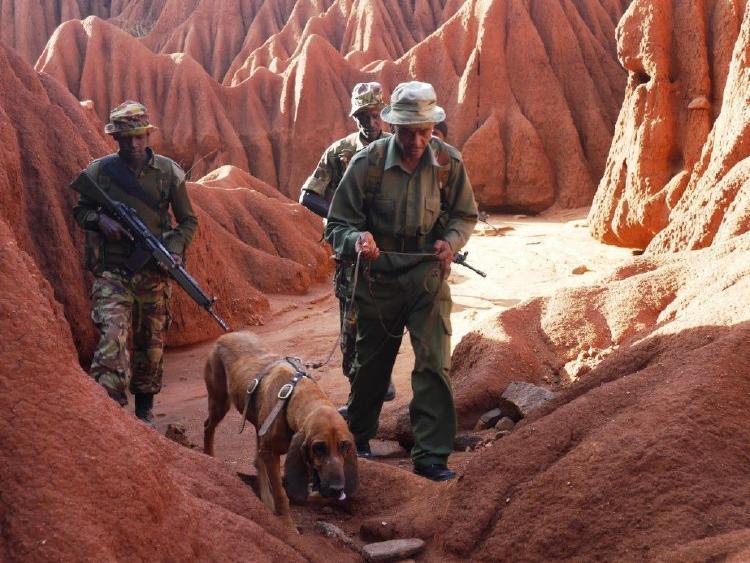 perros-guardianes
