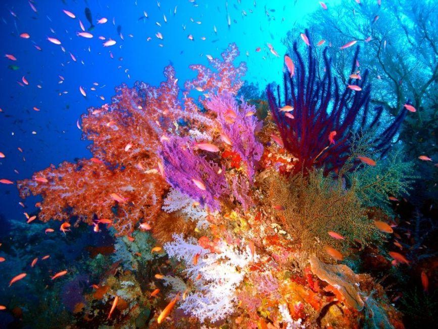 Se calcula que han desaparecido el 50% de los corales marinos en Filipinas
