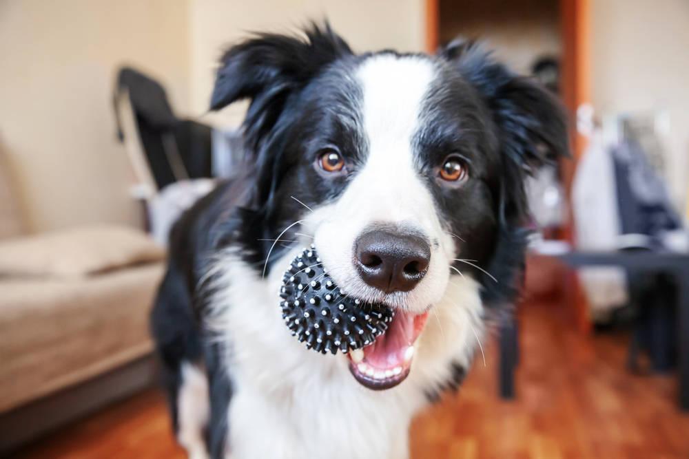 Cómo mantener la actividad física de tu mascota en cuarentena