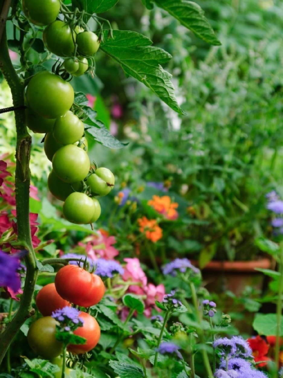 Cómo hacer un jardín comestible