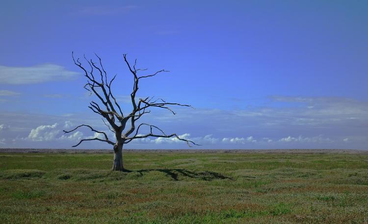 Cambio climático en Argentina en el 2020: Consecuencias