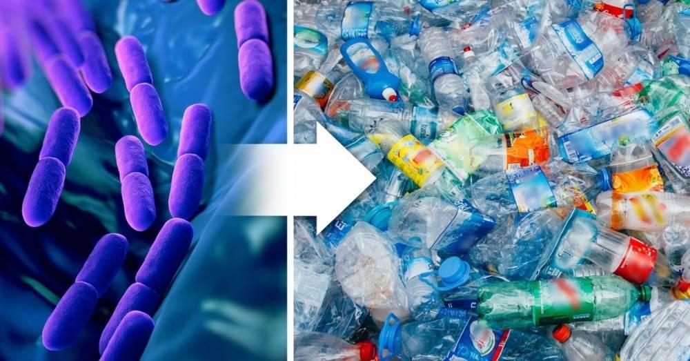 Crean por error una bacteria mutante que hace desaparecer el plástico
