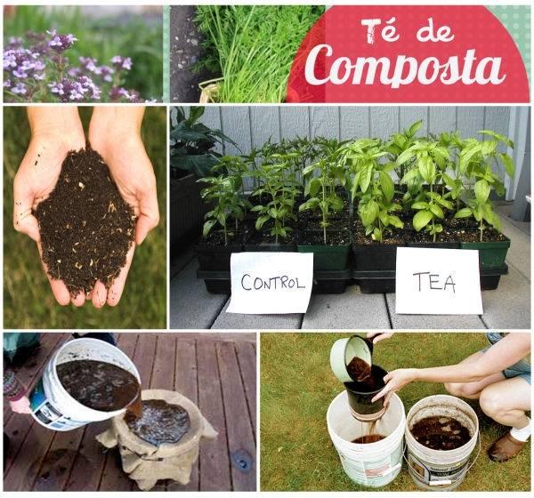 Cómo hacer té de composta para nutrir las plantas