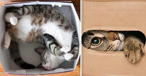 Esta es la razón por la que tu gato no puede resistir meterse en una caja