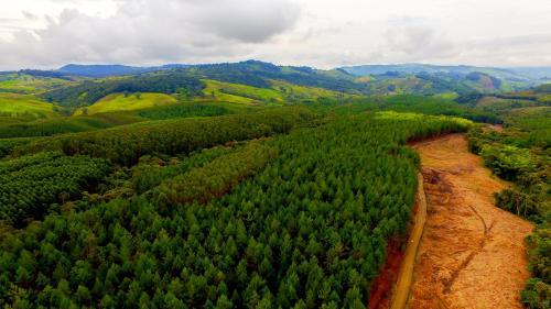 Europa busca frenar el cambio climático con la siembra de 3 millones de árboles
