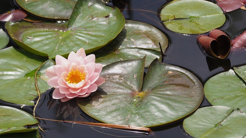 El significado de esta flor te ayudará a ser más resiliente