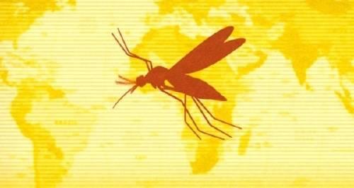 Brote de fiebre amarilla: ¿Qué hay que saber? ¿Es necesario vacunarse?