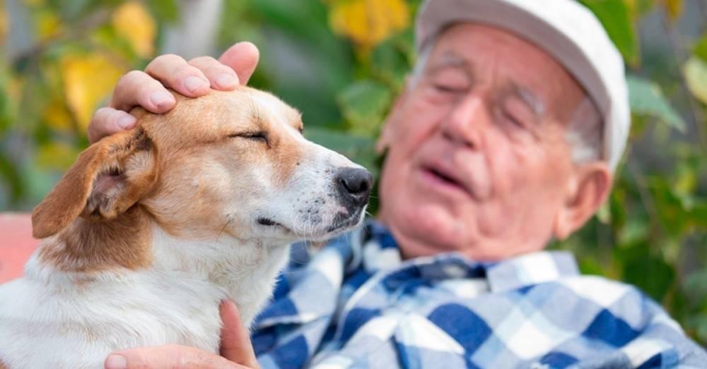 Comprobado: ¡Tener un perro reduce las posibilidades de infarto!