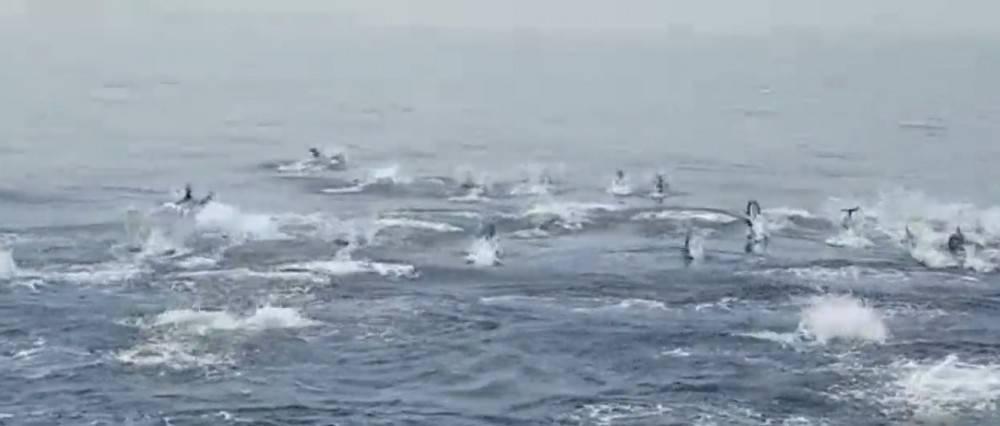 ¡Cientos de delfines aparecen sorpresivamente en Almería!