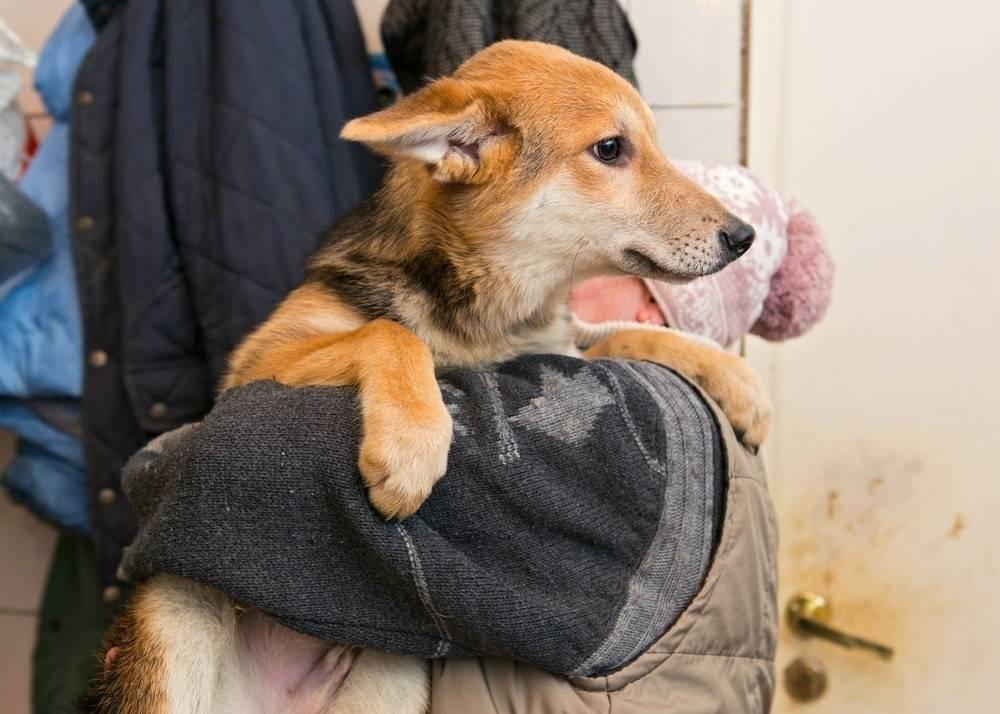 Conoce la ciudad argentina que baja los impuestos a quienes adoptan perros cal..