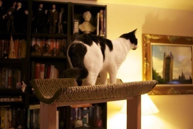 Cómo hacer una torre de juegos para gatos