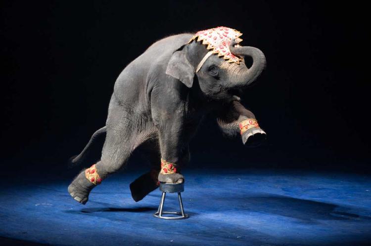 circo animales 2
