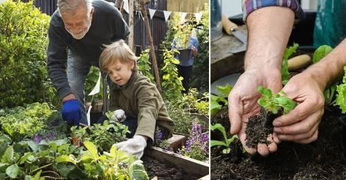 ¿Por qué la agricultura familiar puede ser la clave para mejorar algunos de ..