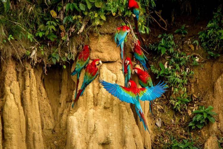 aves amazonas