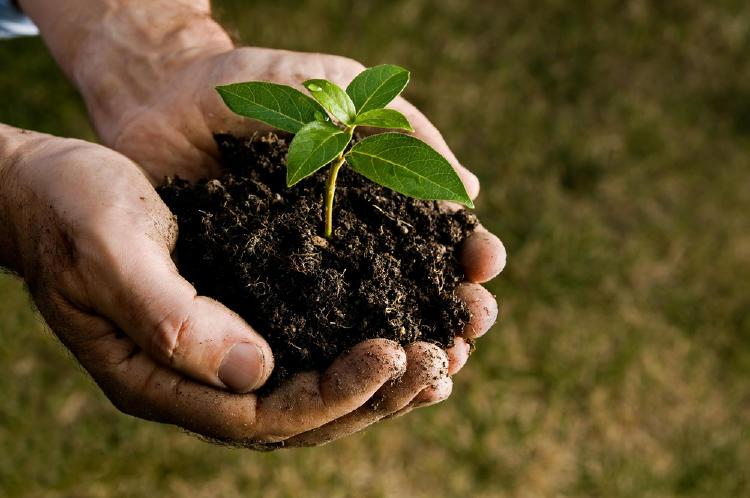 planta manos