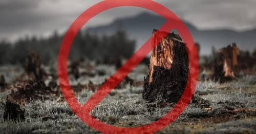 Este es el primer país del mundo en prohibir la deforestación